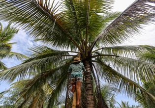 Enjoy the coconut farm