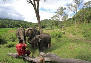 Prenez soin d'éléphants à Doi Inthanon Elephant House