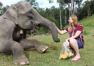 A Day to Explore Elephant Life Experiences