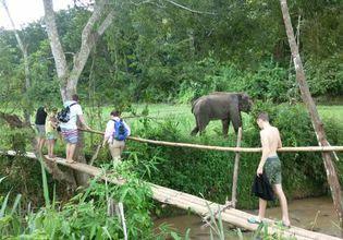 Elephants care & Hiking with a local life