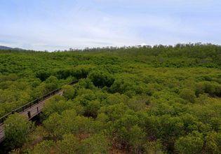 来看看泰国森林里的野生动物