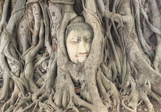 Buddha Head is tangled with the tree roots at Wat Mahathat