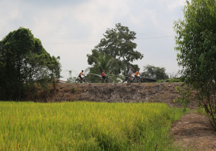 Cycle along rice fields