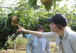 Japanese Pear Picking and Organic Farm Adventure