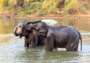 [Joined Tour] See The River Kwai & Go On a Trekking Day Tour