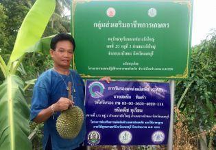 Durian Farmer @ Nonthaburi - Daddy