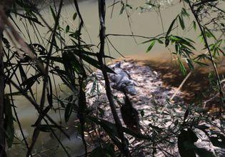 Khao Yai National Park Full Day Tour