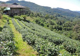 Relax for lunch and enjoy a cup of fresh organic tea