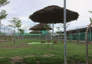 Tiger feeding and The Floating Market  and Maeklong railway market
