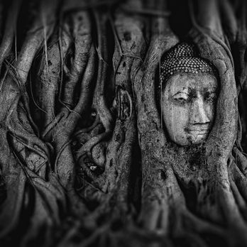 Buddha Head in Tree Roots at Wat Mahathat