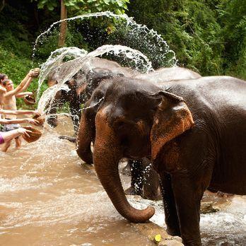 Bathe the elephants