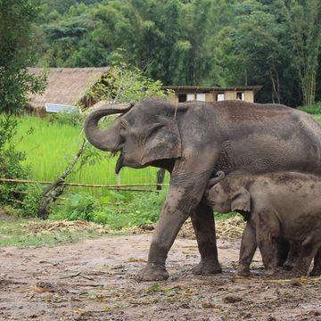 带可爱的大象去洗澡