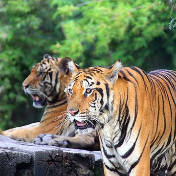 Safari World - Take a Tour of  Bangkok's Open Zoo