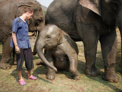 Interact With Elephants on This One-Day Tour of Chiang Mai