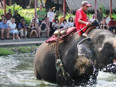 Thai village culture & Elephant Show