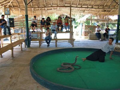King Cobra Show and Exotic Animals Tour!