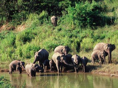 See Elephants and Wildlife On a Tour of Kui Buri National Park