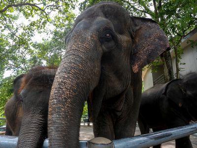 Open Zoo & Temple Tour