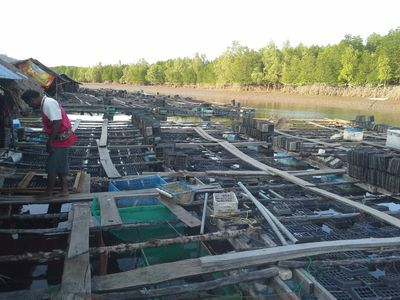 Seafood and fish farm
