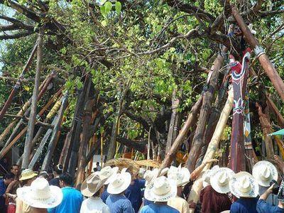The lanna Mai Kham.