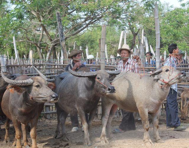 Chiangmai Countryside Flea Market Tour