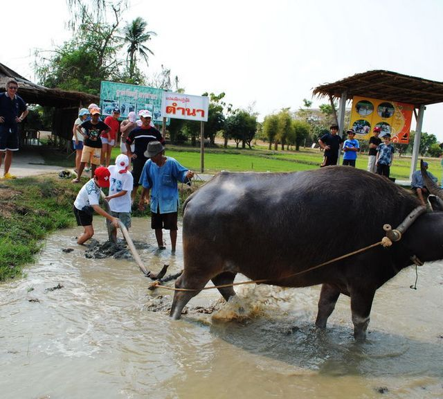 Suphan Buri Day Trip at Buffalo Village and 100 Years Market!