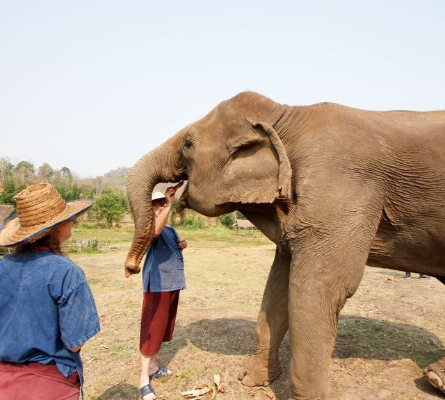 One-Day Elephant Sanctuary + Bamboo Rafting + Long Neck Village + Butterfly and Orchid Farm