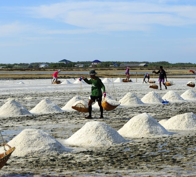 From Sea to Table : A Day as A Fisherman, Mangrove Forest & Salt Farm