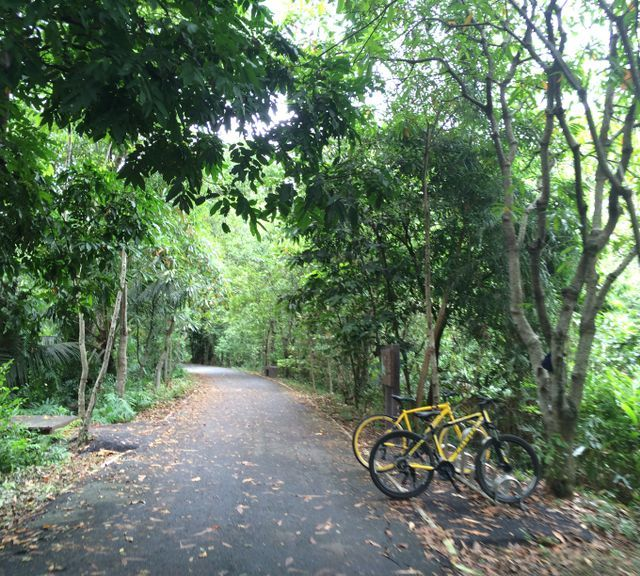 Bike Tour of Bangkok's Green Lung