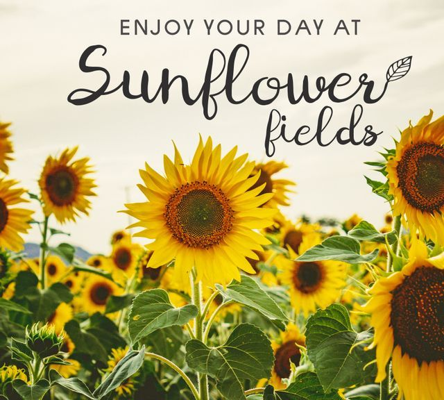 Tour Saraburi to Sunflower Fields In One Day