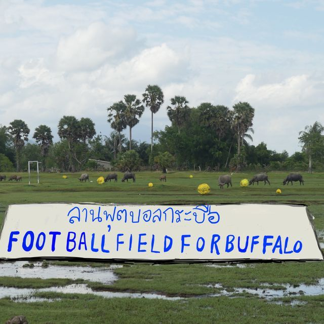 Football Field for Buffalo