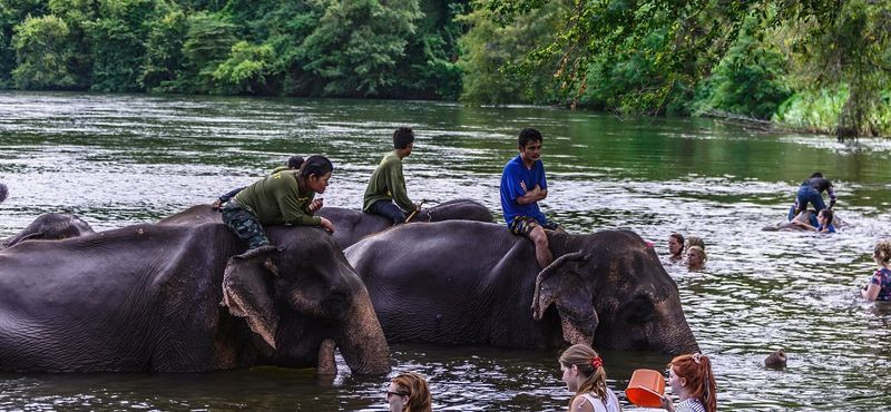 Ethical Tourism to the Elephant's Home in Kanchanaburi