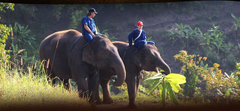 Elephant Interaction Tour in Chiang Mai
