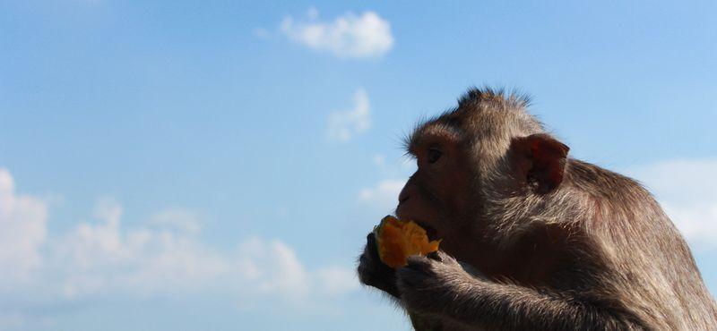 Undisturbed Islands & Monkey Feeding!